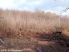 coppicing-with-ben-law_0026