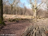 coppicing-with-ben-law_0030