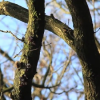Thumbnail image for Secret Circle Woodland – a video by Jason Smalley