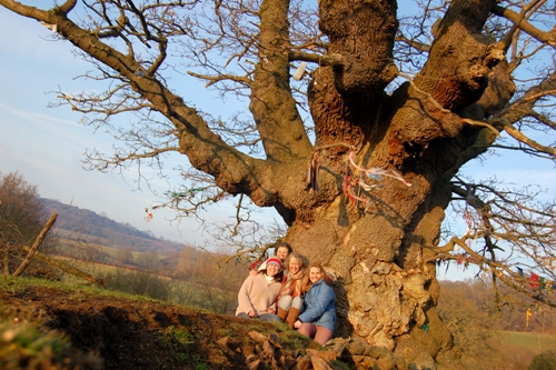 Love Trees - White Leaved Oak 8