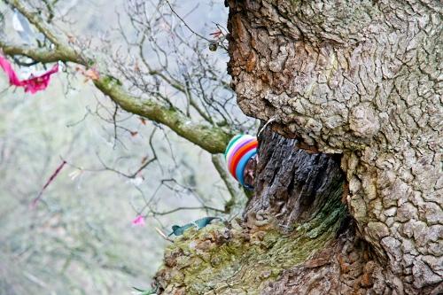 Love Trees - White Leaved Oak - ginbat 3