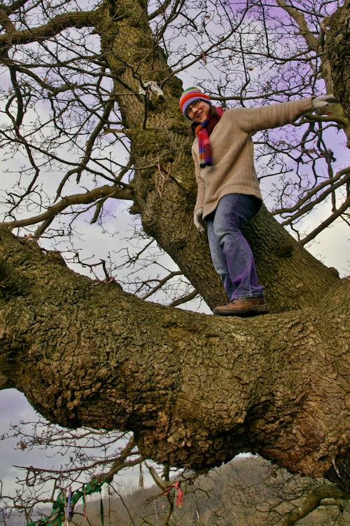 Love Trees - White Leaved Oak - ginbat 4