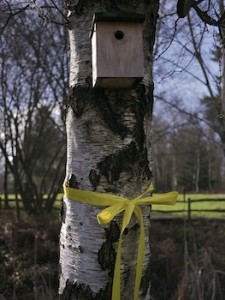 Yellow Save Our Forests Ribbon And Bird Nesting Box on Birch Tree Alice Holt Forest Surrey