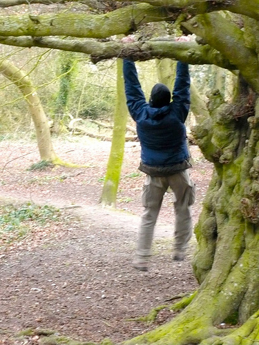 Love Trees - Tarzan Tom - Nick Gallop 4