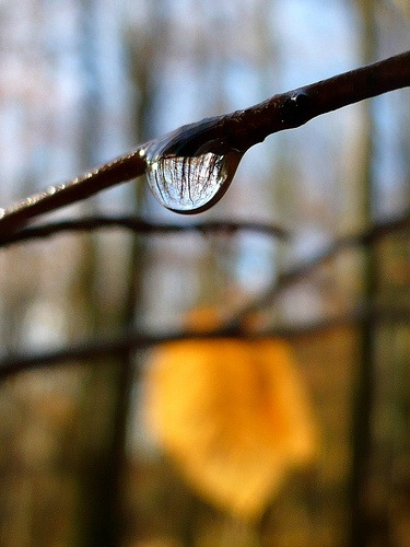 Love Trees - Trees In A Raindrop - Nick Gallop 6