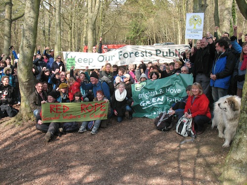 Post image for Forest Lovers Celebrate in Friston Forest