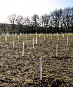 treeplanting-0211-118