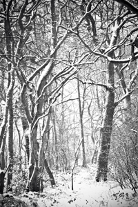 alvecote_wood-snowing-hr