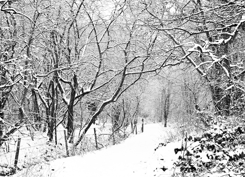 alvecote_wood_AW-snowing