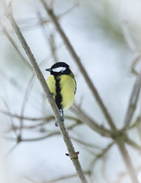 alvecote_wood_feeder-birds-snow