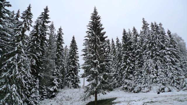 UpTrees 186_trafalgar Sq christmas tree